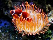 Zoo Aqua Terra - Casa del mar (Aqua Terra Zoo - Haus des Meeres)